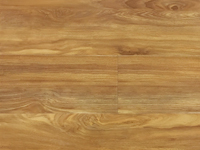 HTL009 Spotted Gum